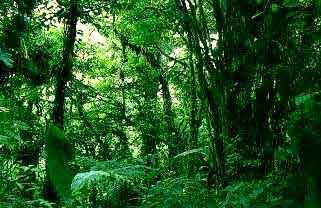 الغابة موضوع شامل الكاتب Kingston Dt الغابة مساحة كبيرة من الأرض مغطاة بالأشجار لكنها أكثر بكثير من كونها أشجار ا فقط لأنها تشمل أيض ا نباتات أخرى أصغر حجم ا مثل الطحالب والشجيرات والأزهار البرية وبالإضافة إلى ذلك فإن أنواع ا عديدة من الطيور والحشرات